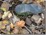 Moss Shoe